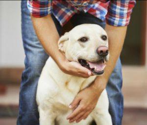 ontspannend leven-stress-dog