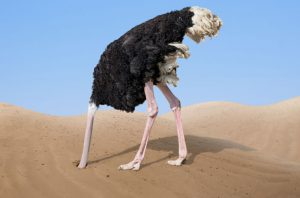 struisvogel stress in het leven