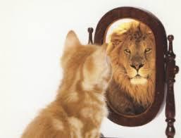 vergelijken-vette ego's